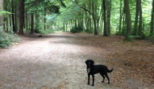 Self catering Holidays in Norfolk with Woodland Walks