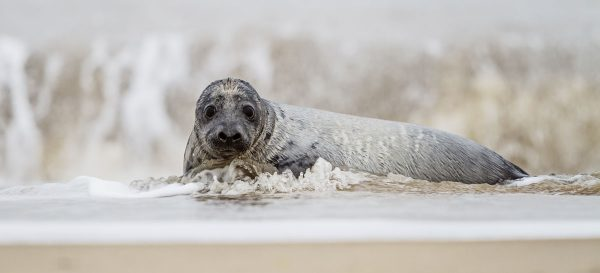 Where to stay to see the grey seals in North Norfolk